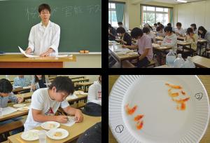 photo-sakuraebi