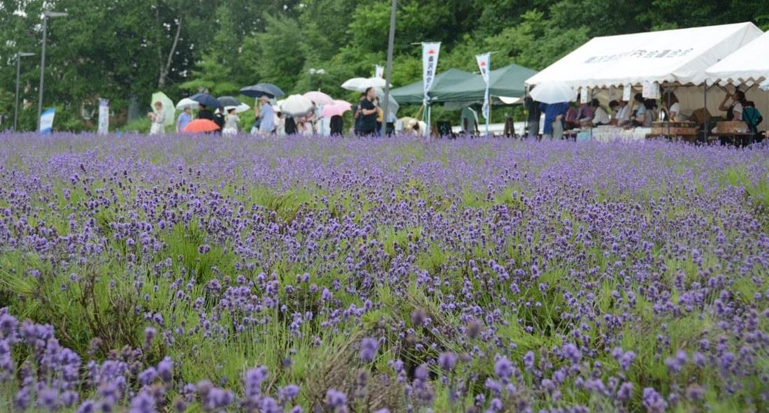 170716 Lavender-matsuri_01